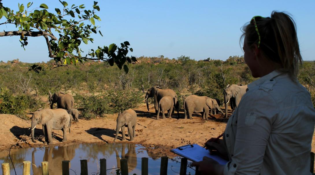 Conservation intern monitors a herd of elephants as they roam around a watering hole in Botswana.